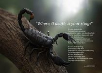 O Death Where Is Your Sting